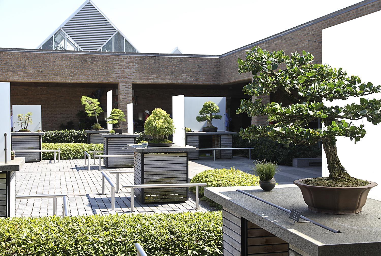 Chicago Botanic Garden Bonsai Collection Valavanis Bonsai Blog